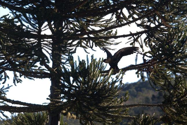Birds of Curucaca valley