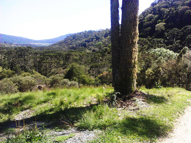 Lot in Santa Catarina